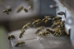 La sauvegarde de la biodiversité divise