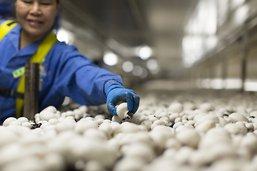 Un cercueil à base de champignons pour préserver la nature