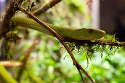 Expo «Reptiles du monde» aux galeries du Rex