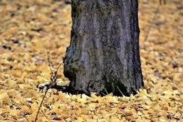 Des feuilles mortes pour une vie plus forte