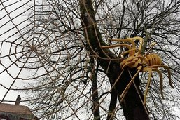 Une araignée géante au Jardin anglais