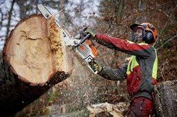 Les forêts fribourgeoises sont stables