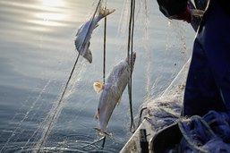 La patience des pêcheurs mise à l'épreuve