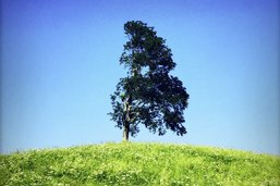 «L'arbre a une histoire passionnante»