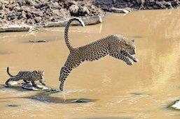 Son œil dompte la faune sauvage